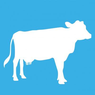 Lactate vacă